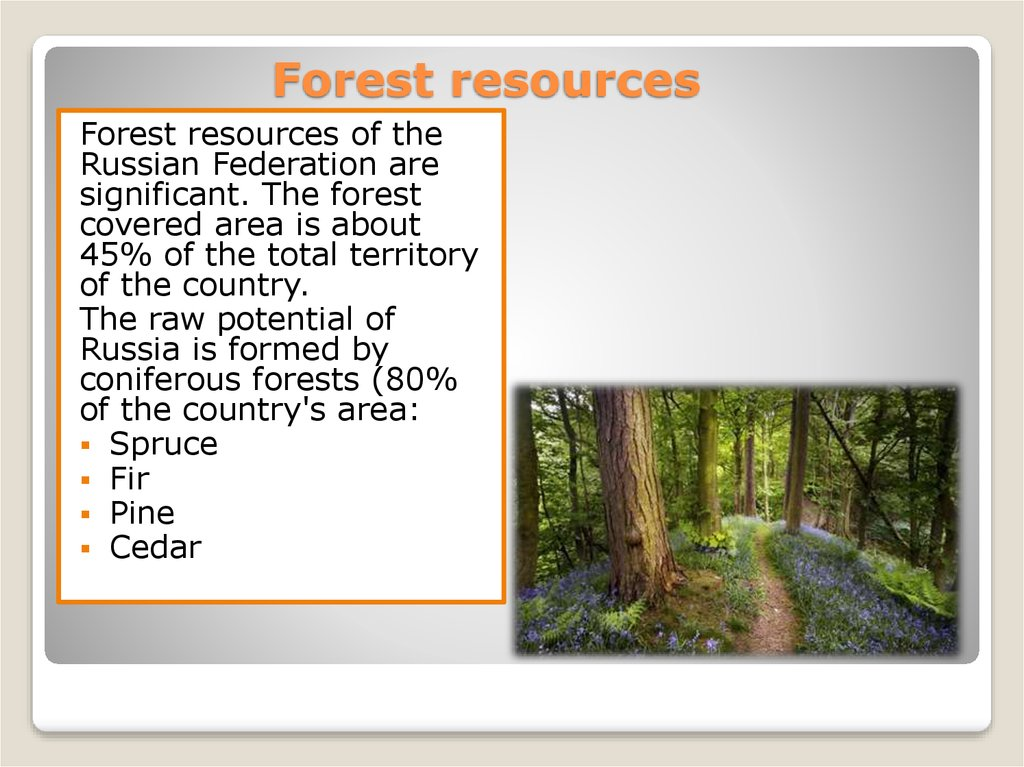 One tree can start a forest; Natural Resources Online Presentation