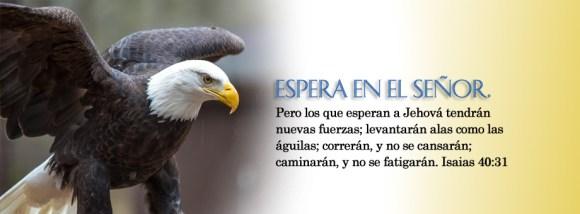 spanish-banner