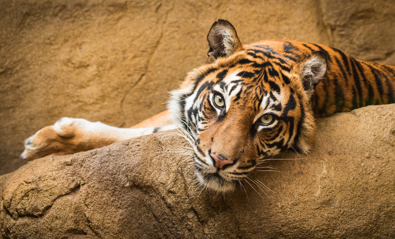 What Happens To Zoo Animals During A Natural Disaster
