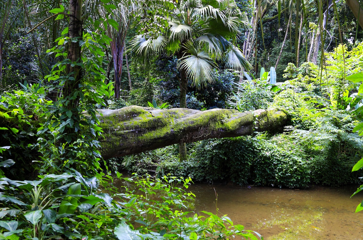 The atlantic forest stretches from northeastern brazil down to northern argentina. What Remains Of The Atlantic Forest After Destruction Exploitation Earth Com