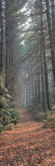 Smoky trail