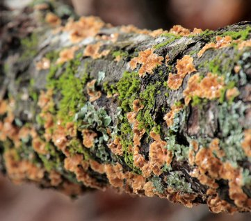 More lichen