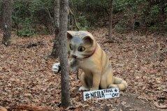 Nicola, the trail cat