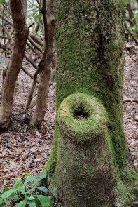 Mossy tree hole