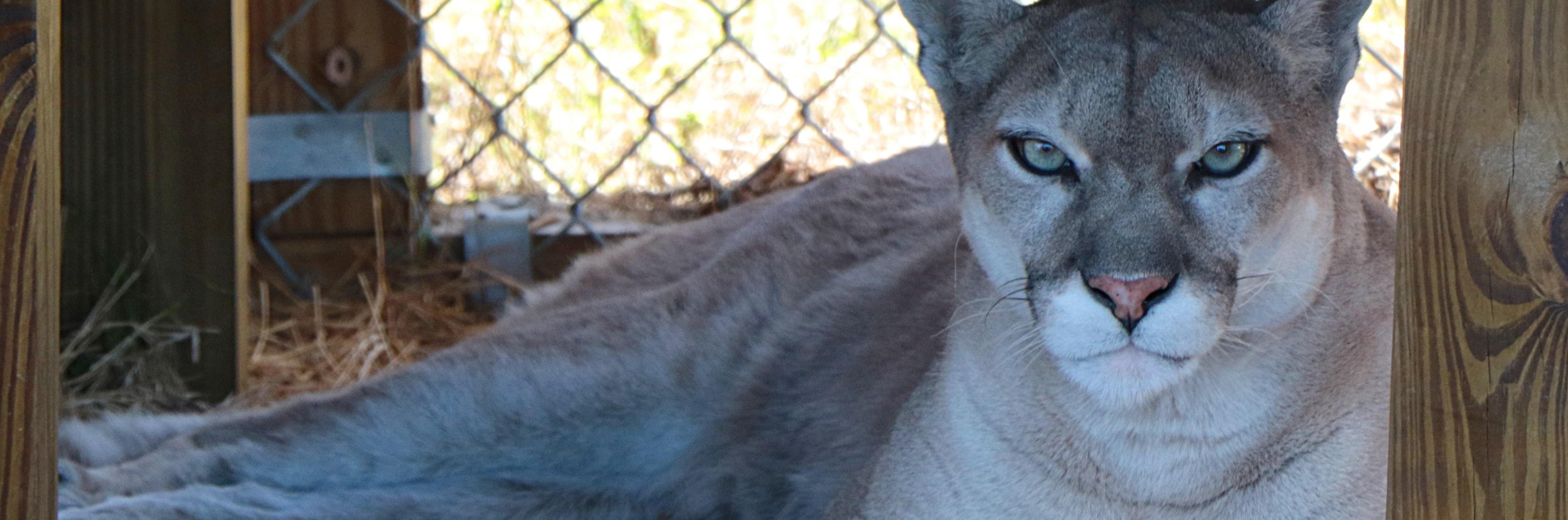 Kukla - Central Florida Animal Reserve
