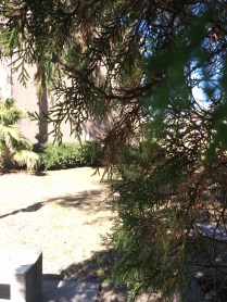 A shot through the trees of the N building.