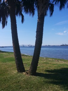 Two palm trees frame the Mathews Bridge, with a view of downtown Jacksonville.