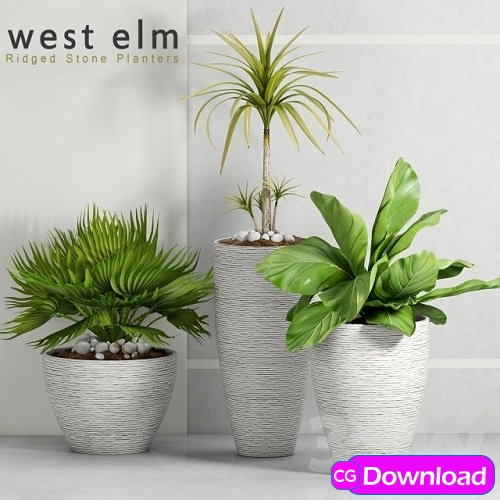 Download PLANT -34 3d Model Free
