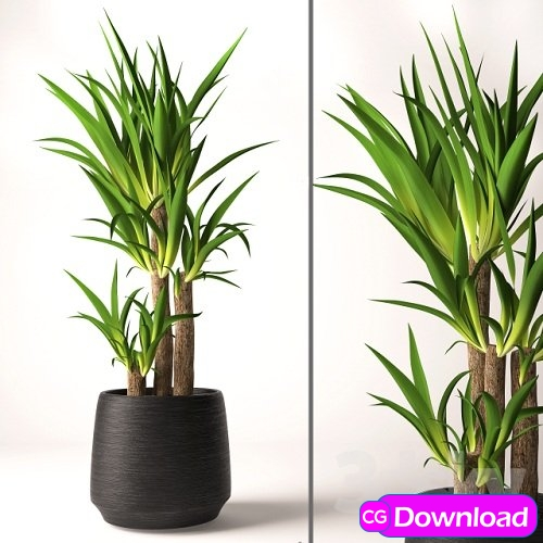Download Yucca plant Free