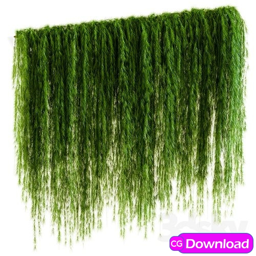 Download A wall of drooping plant branches Free