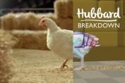 Hubbard CGI Breakdown