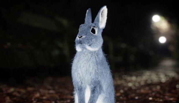 Making of Follow The Rabbit 2