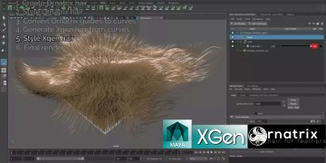 Using Xgen Alongside Ornatrix to Style and Simulate Hair