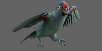 Parrot blue rump by Yannick Vincent