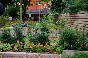 Focus on Muck and Magic Community Garden