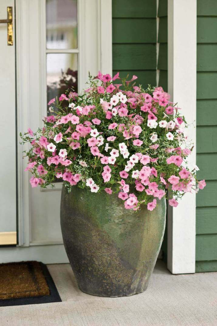 Beautiful front door with flower pots that will make your space look professionally designed.
