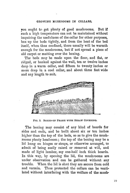 How to Grow Mushrooms: A 19th-Century Approach image 5