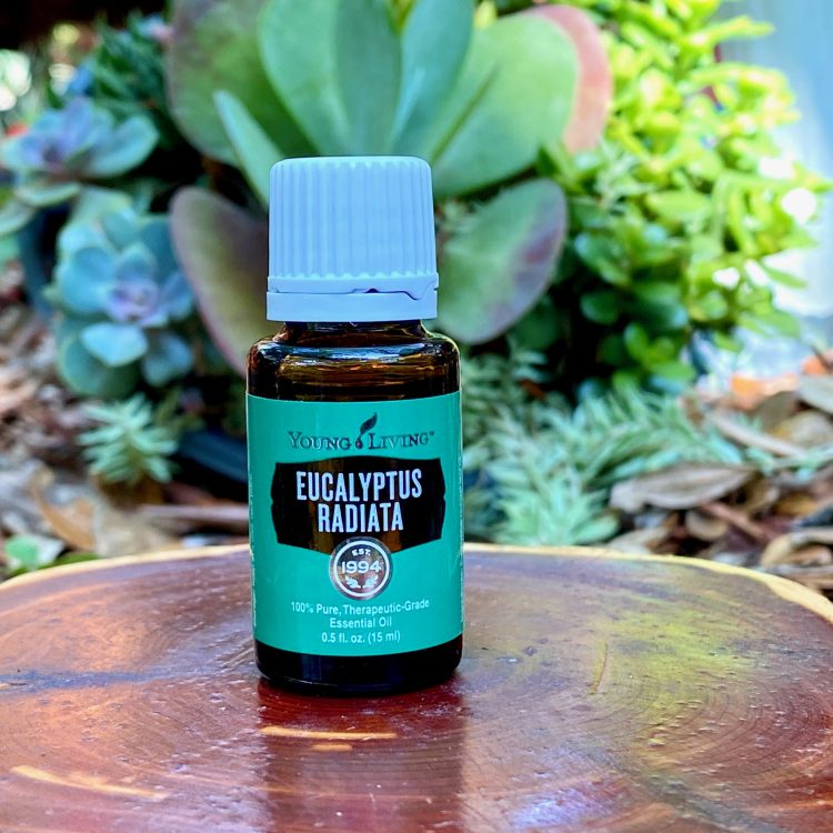 Eucalyptus Radiata Essential Oil (15ml)