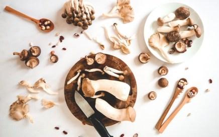 Conheça os principais tipos de cogumelos comestíveis e seus benefícios para a saúde