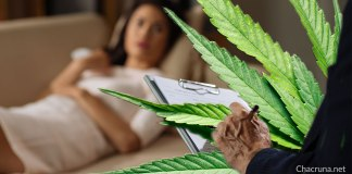 Cannabis CBD psychiatrist researcher
