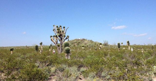 Harversting Peyote