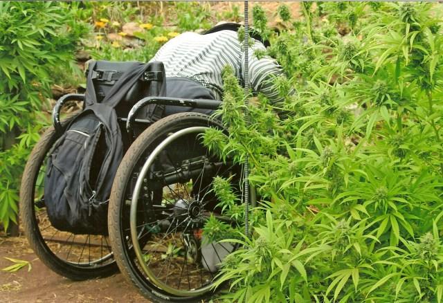 wheelchair worker WAMM