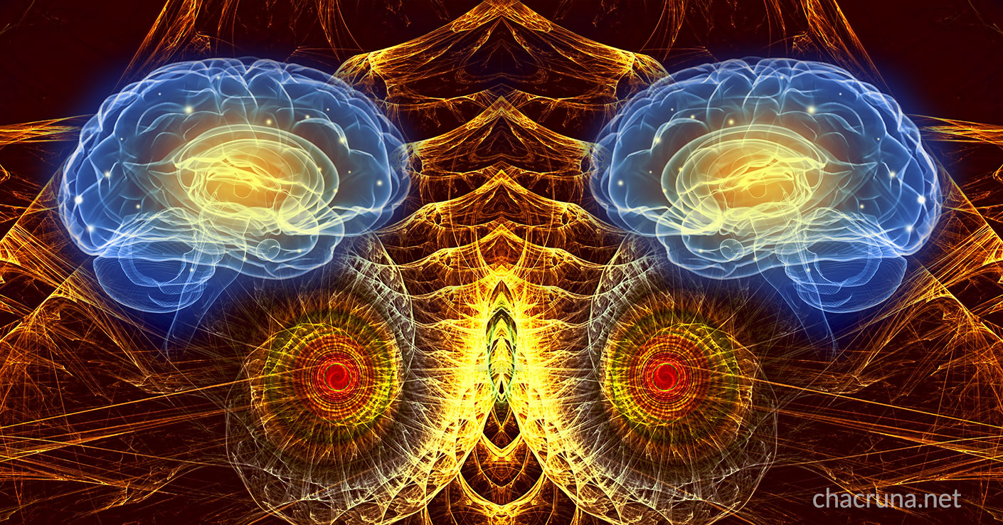 The DMT Experience, The Human Brain & The Science of Consciousness