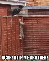 funny-Lion-King-reenactment-real-cats-1