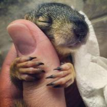 whatever-happens-dont-say-awww-27-photos-11