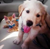 whatever-happens-dont-say-awww-27-photos-15