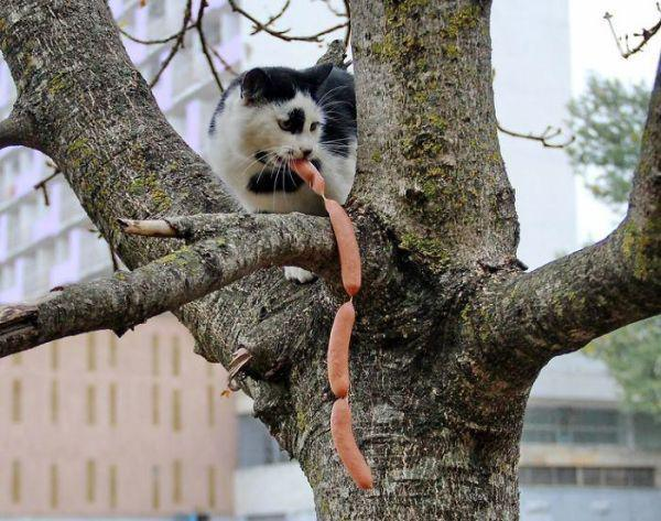 animal-thieves-caught-red-handed-20-photos-2