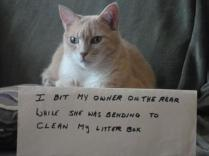 cat-shaming-17