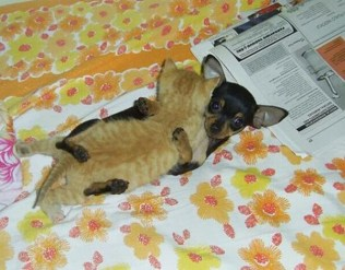 everyone-needs-a-snuggle-buddy-10