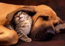 everyone-needs-a-snuggle-buddy-16