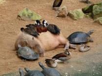 everyone-needs-a-snuggle-buddy-20