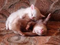 everyone-needs-a-snuggle-buddy-3