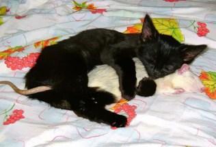 everyone-needs-a-snuggle-buddy-4