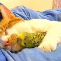everyone-needs-a-snuggle-buddy-5
