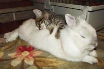 everyone-needs-a-snuggle-buddy-6