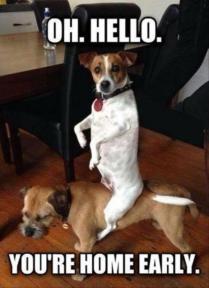 animals-make-you-laugh-0