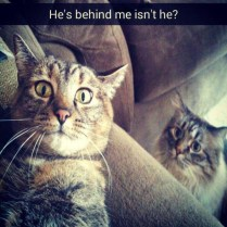 cat-saturday-23-photos-8