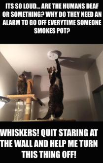 funny-cats-smoking-weed