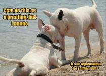 fun-animals-16