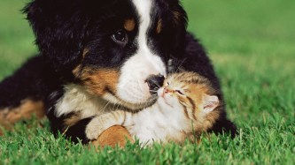 cats_dogs_kittens_grass_animals_puppy_cute_love_1920x1080