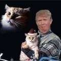 best-damn-photos-trump-holding-cats