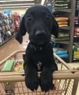 best-damn-photos-cute-black-puppy