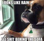 best-damn-photos-dog-sees-rain