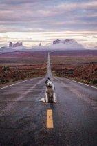 best-damn-photos-dog-sup-road