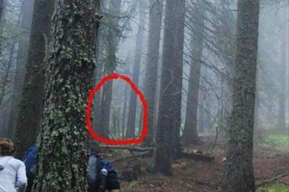 best-damn-photos-forest-slenderman