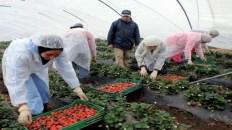 مطلوب عمال وعاملات فلاحيين بدون شهادة او دبلوم بدولة فرنسا